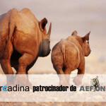 Arcadina es patrocinador de Aefona