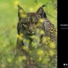 Ramón Navarro crea su web especializada en fotografía de Naturaleza y Deportes