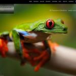 Web del italiano Francesco Giacalone, Istinti fotografici, fotografía MACRO