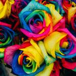 Mejora el diseño de tu web con las paletas de colores